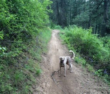 1_Penn Trail, May, 2015, Coeur d'Alene, Idaho