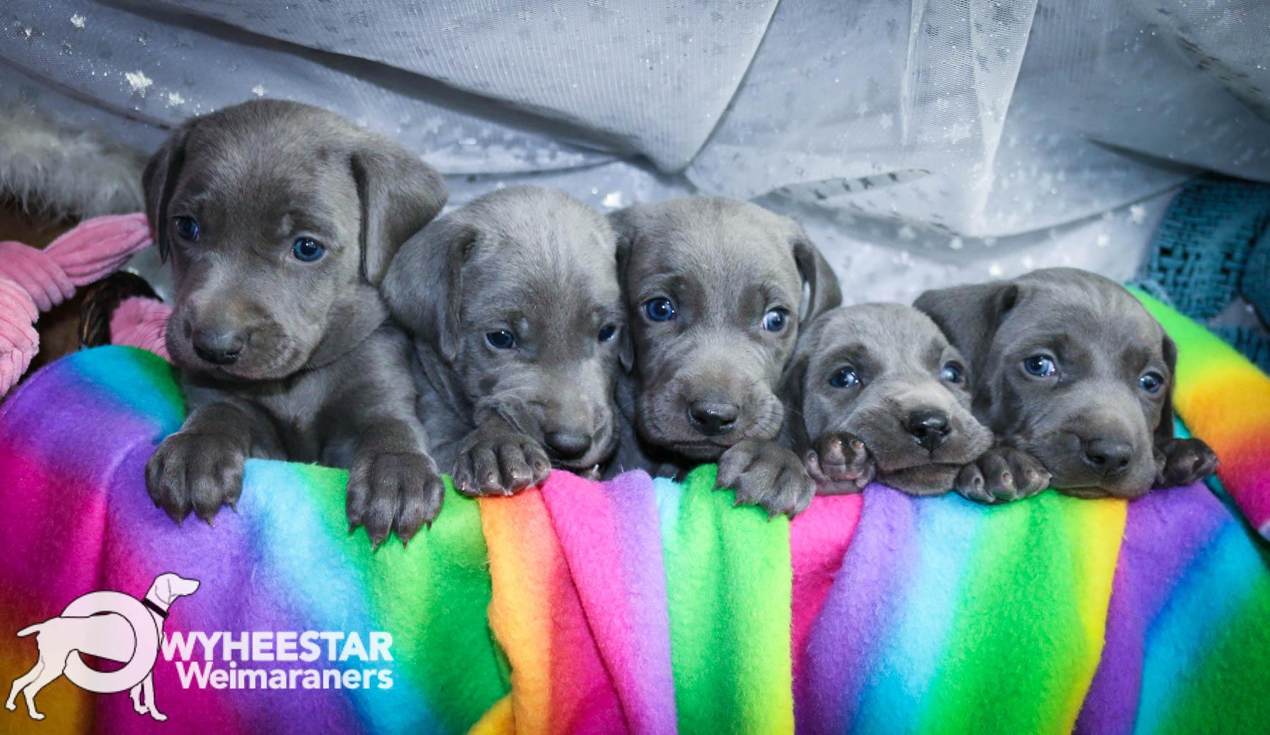 5 Blue Males-Zula Blue X Blue Week Four-120.jpg
