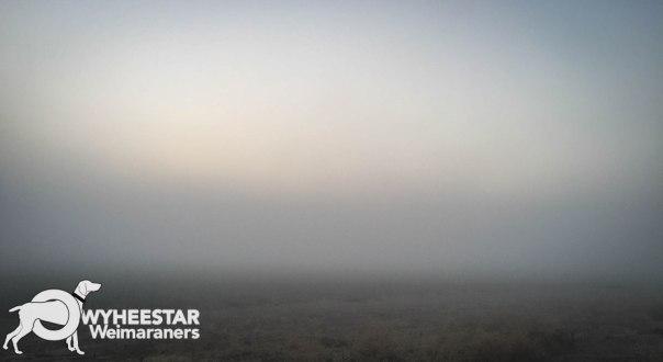 fog-bank