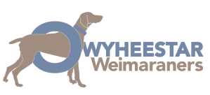owyheestar-colored-field-weim-logo-2