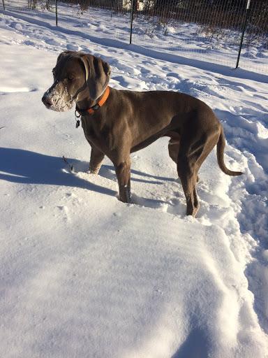 heermans-ringo-snowboy