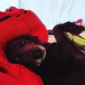 kolegues-atticus-camping