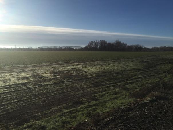 Hay Field_5255
