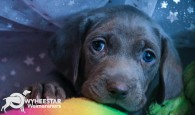 Blue Web Pup Photos-14