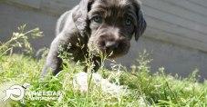 Longhair Web Pup Photos-8