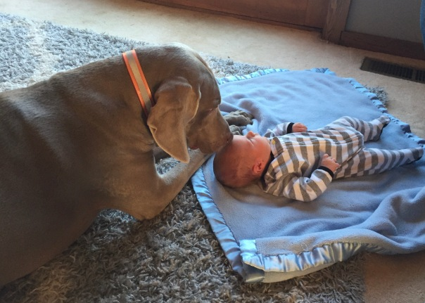 Shaub's Hank Babysitter-3