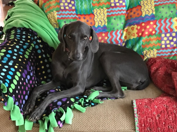 Davidson's Ellie resting_0153