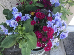 Front Entry Flowers_5887