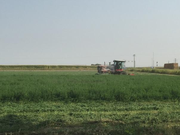Hay Cutting 3_6756