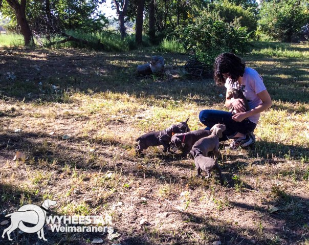 Play Time at the Sanctuary Sept 1, 2017-37