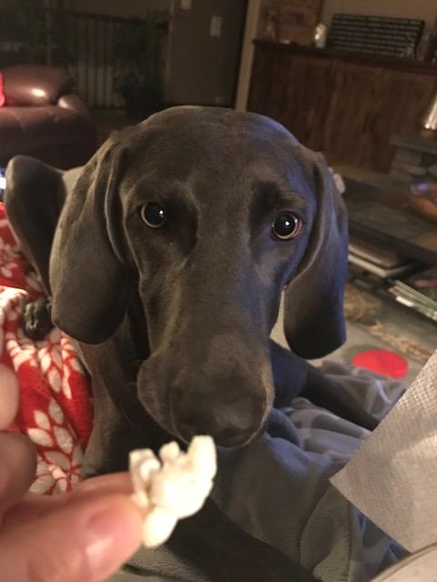 Crane's Lucy Loves Popcorn