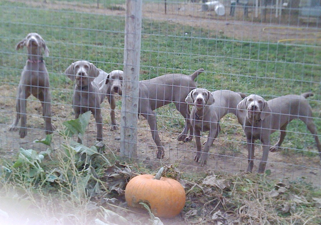 Mousse Ginger Gilligan Cindee and Vidalia at Pumpkin Vine_0085