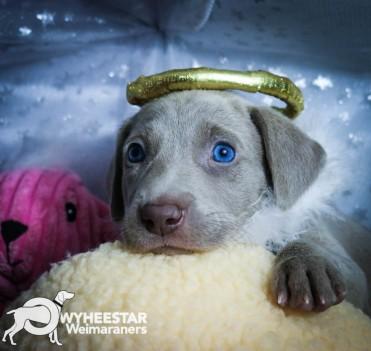 5-Wilma X Blue 2016 5WKS-21
