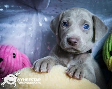 5-Wilma X Blue 2016 5WKS-35
