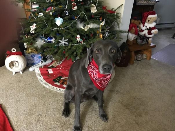 Mesquite Christmas 2017_0379