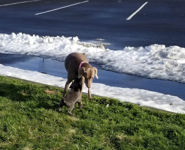 Winnie meets Colt