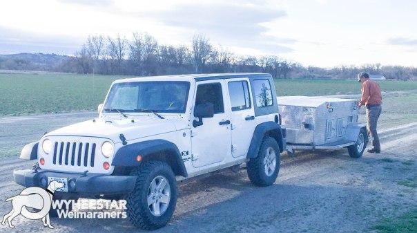 Jeep & Weim Trailer NAVHDA Spring Training 2018-12