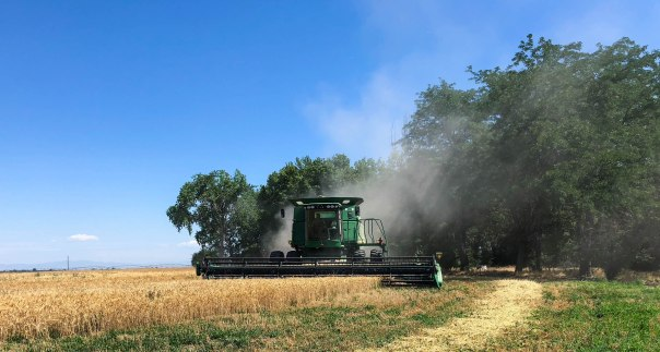 2018 Wheat Harvest at the Nielsen Farm-17