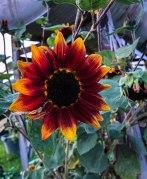 Garden 369 August 2018-3
