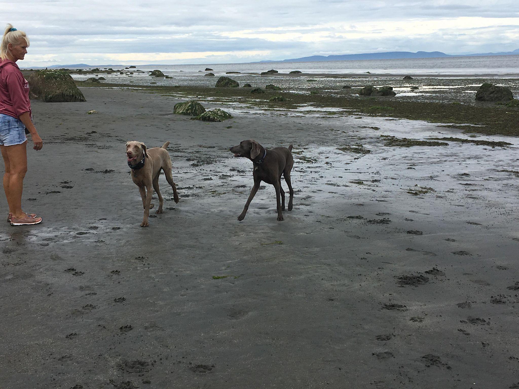 Gatsby & Zeus