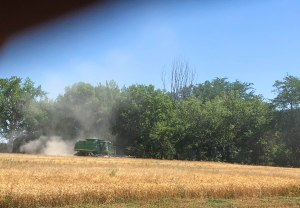 2018 Wheat Harvest at the Nielsen Farm-15